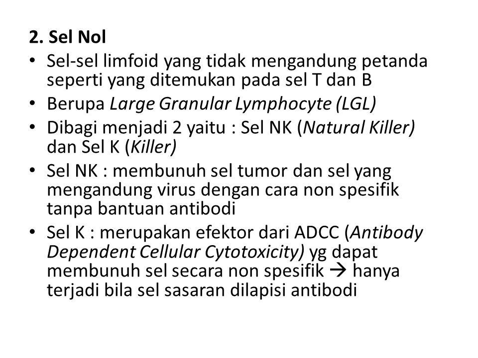 2. Sel Nol Sel-sel limfoid yang tidak mengandung petanda seperti yang ditemukan pada sel T dan B. Berupa Large Granular Lymphocyte (LGL)