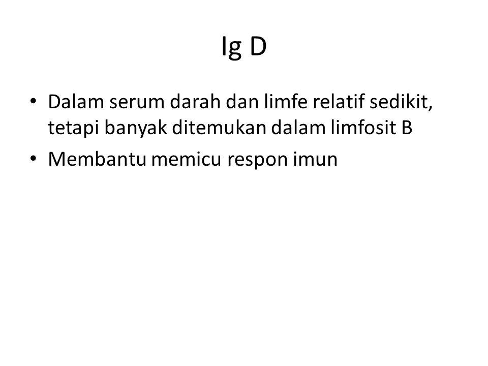 Ig D Dalam serum darah dan limfe relatif sedikit, tetapi banyak ditemukan dalam limfosit B.