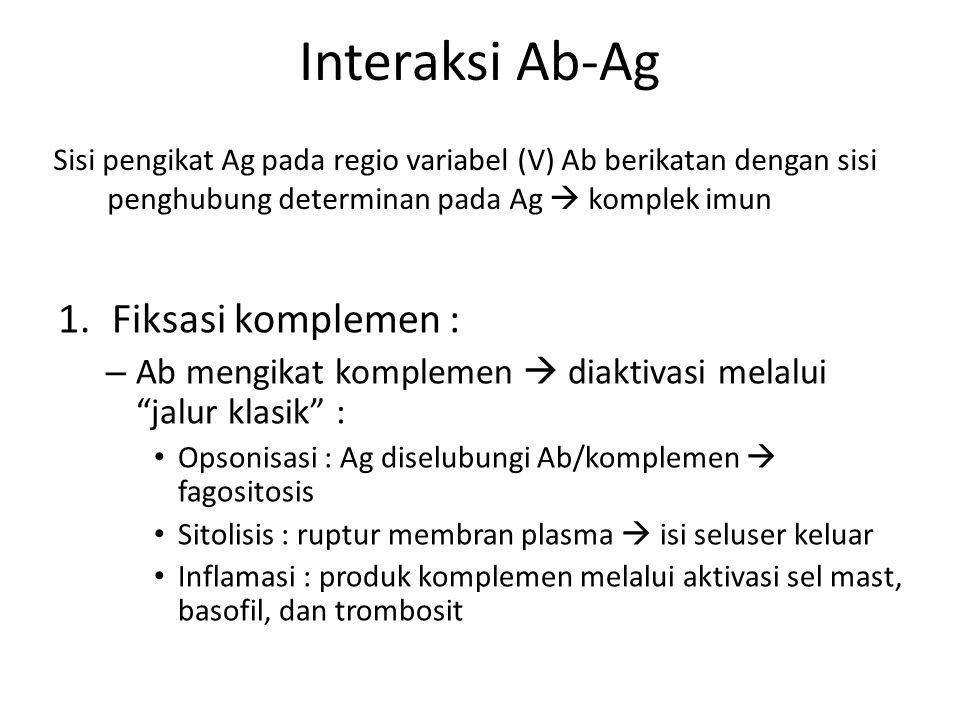 Interaksi Ab-Ag Fiksasi komplemen :