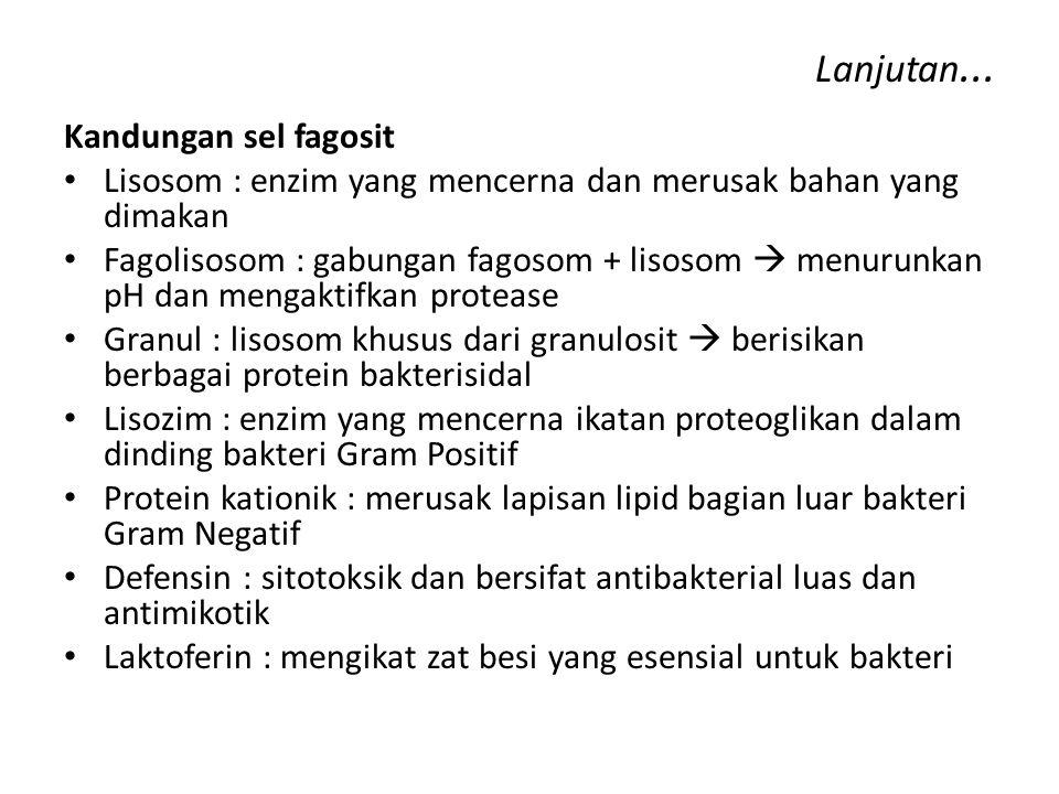 Lanjutan... Kandungan sel fagosit