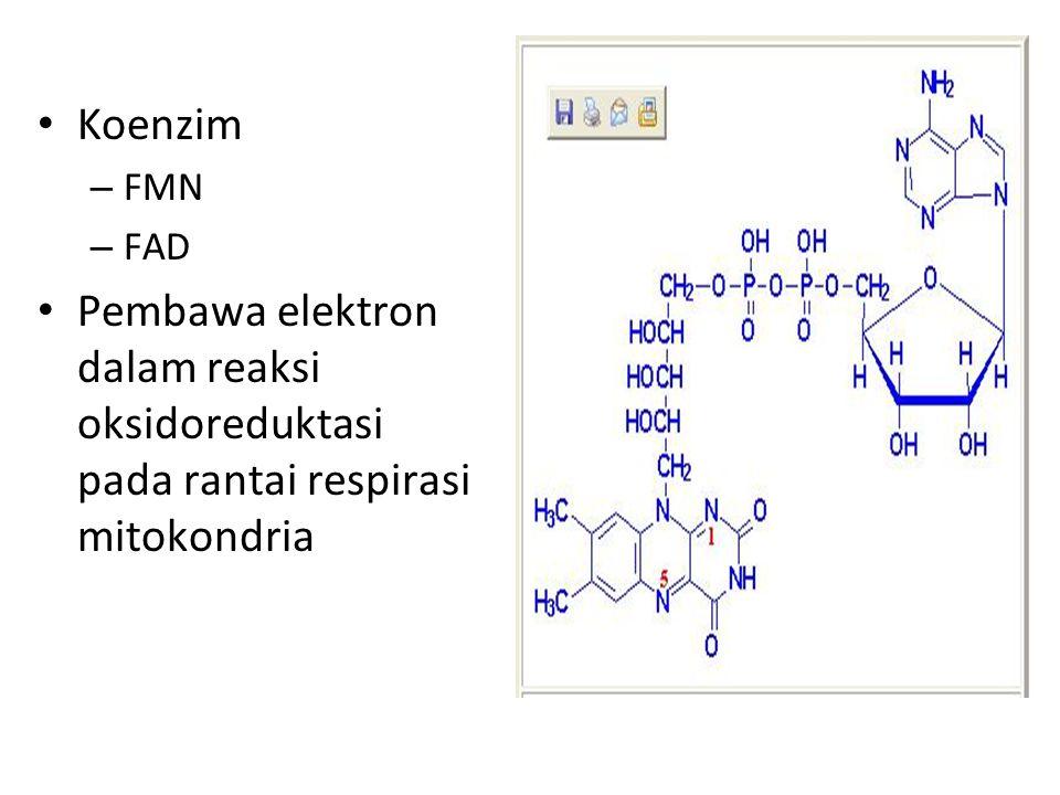 Koenzim FMN FAD Pembawa elektron dalam reaksi oksidoreduktasi pada rantai respirasi mitokondria