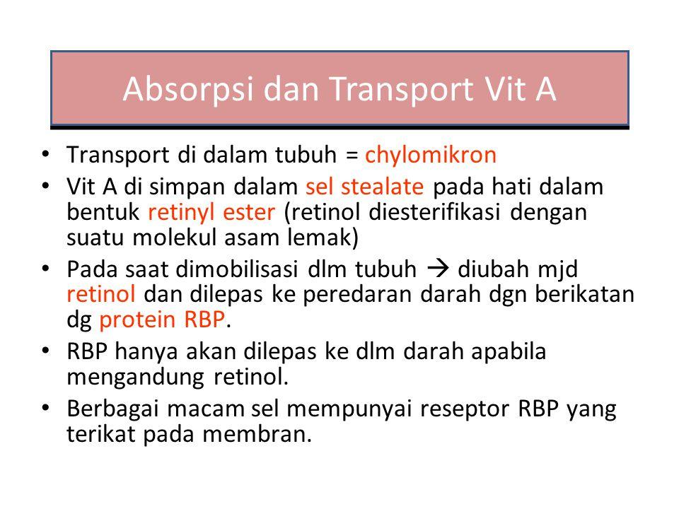 Absorpsi dan Transport Vit A