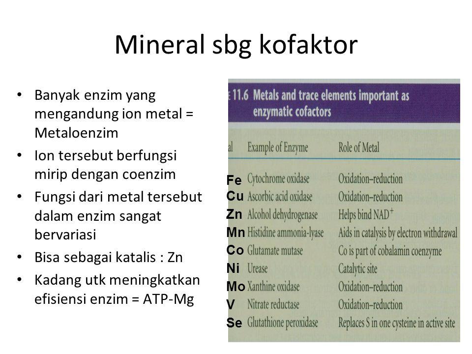 Mineral sbg kofaktor Banyak enzim yang mengandung ion metal = Metaloenzim. Ion tersebut berfungsi mirip dengan coenzim.