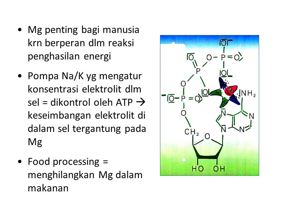 Mg penting bagi manusia krn berperan dlm reaksi penghasilan energi