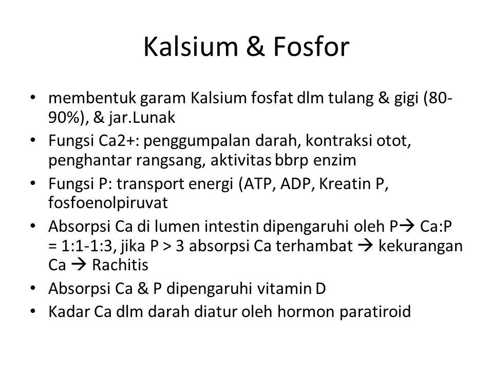 Kalsium & Fosfor membentuk garam Kalsium fosfat dlm tulang & gigi (80-90%), & jar.Lunak.