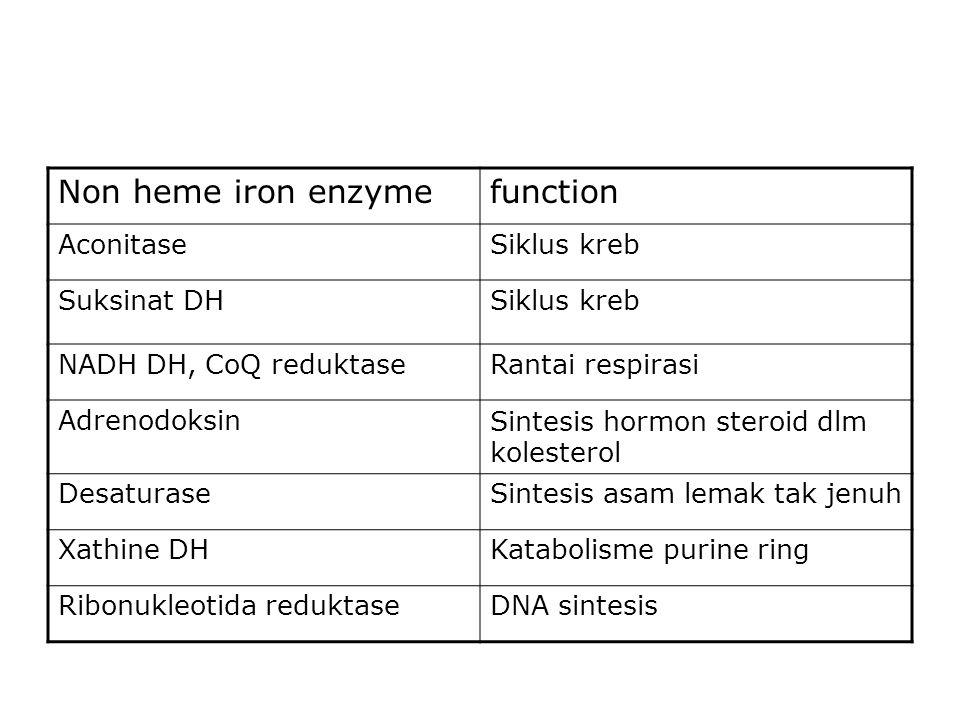 Non heme iron enzyme function Aconitase Siklus kreb Suksinat DH