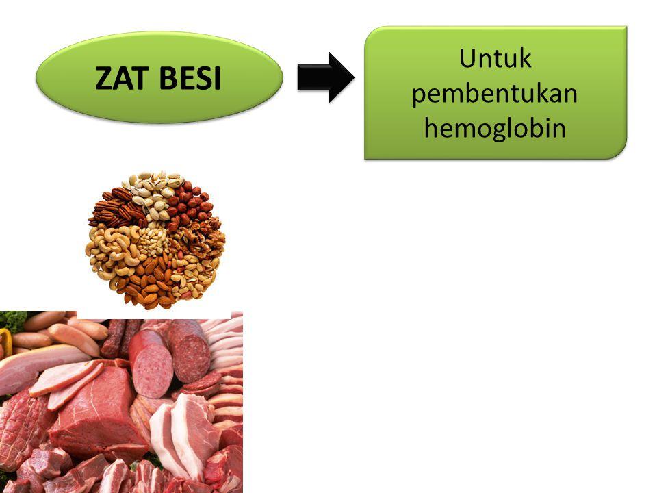 Untuk pembentukan hemoglobin