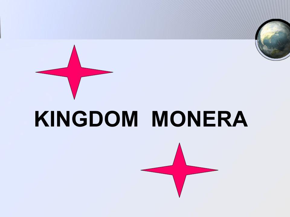 MONERA KINGDOM MONERA