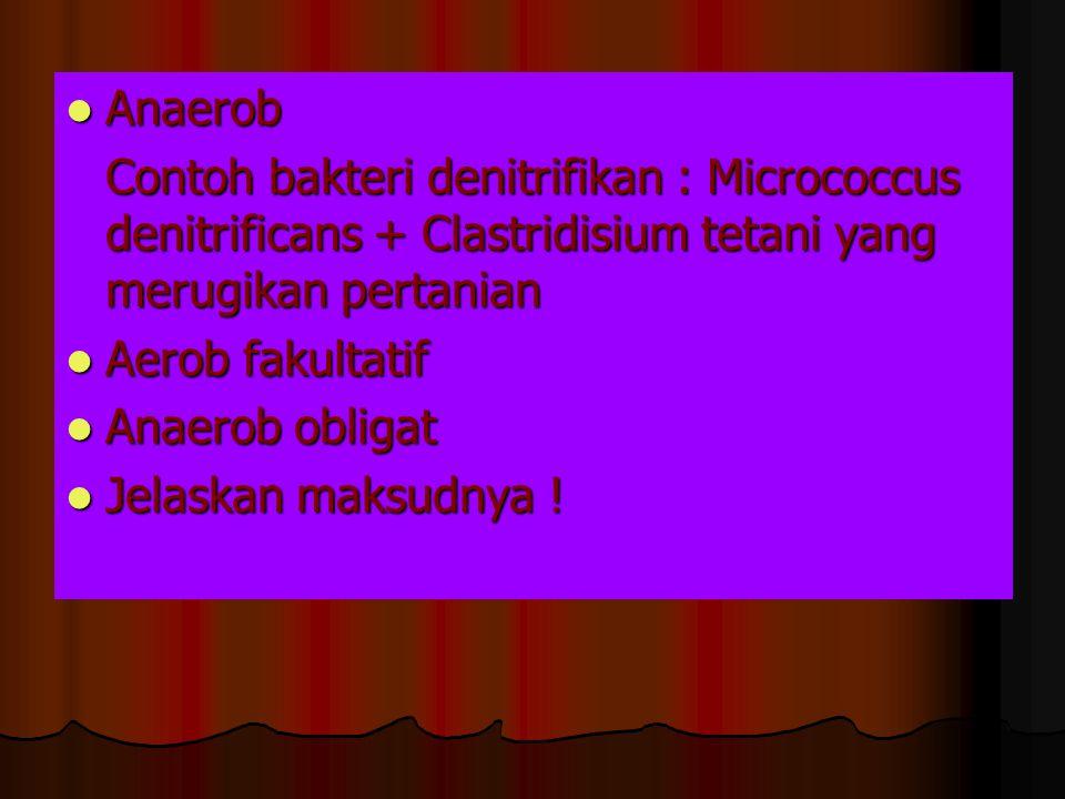 Anaerob Contoh bakteri denitrifikan : Micrococcus denitrificans + Clastridisium tetani yang merugikan pertanian.