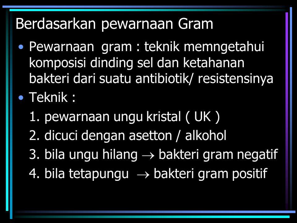 Berdasarkan pewarnaan Gram