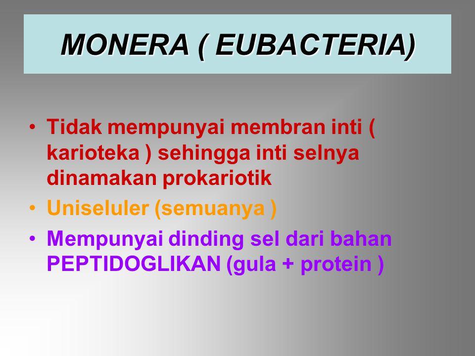 MONERA ( EUBACTERIA) Tidak mempunyai membran inti ( karioteka ) sehingga inti selnya dinamakan prokariotik.