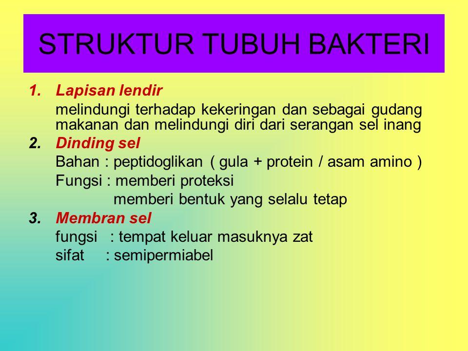 STRUKTUR TUBUH BAKTERI