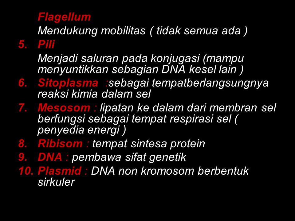 Flagellum Mendukung mobilitas ( tidak semua ada ) Pili. Menjadi saluran pada konjugasi (mampu menyuntikkan sebagian DNA kesel lain )
