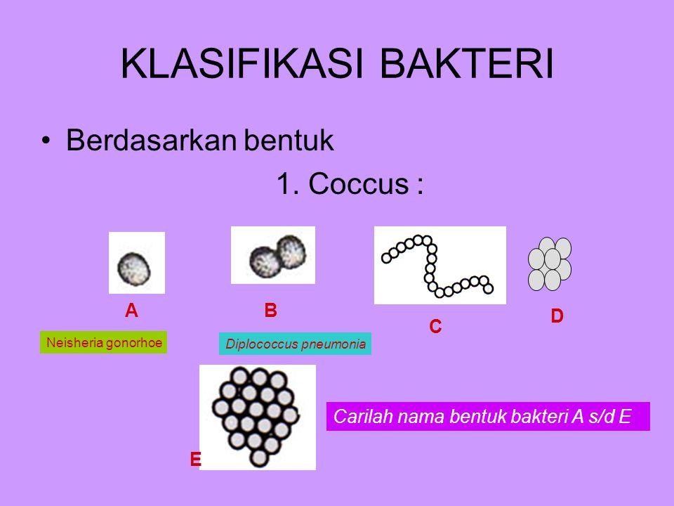 KLASIFIKASI BAKTERI Berdasarkan bentuk 1. Coccus : A B D C