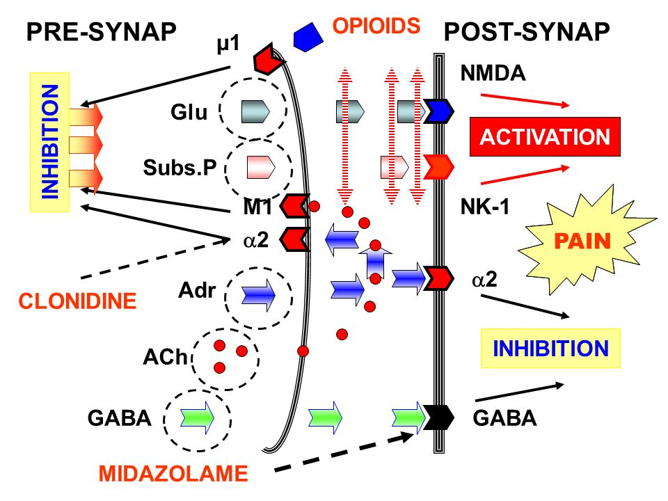 PRE-SYNAP POST-SYNAP OPIOIDS µ1 NMDA Glu ACTIVATION ACTIVATION
