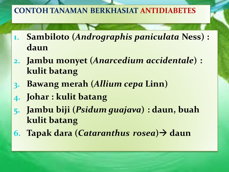 Sambiloto (Andrographis paniculata Ness) : daun