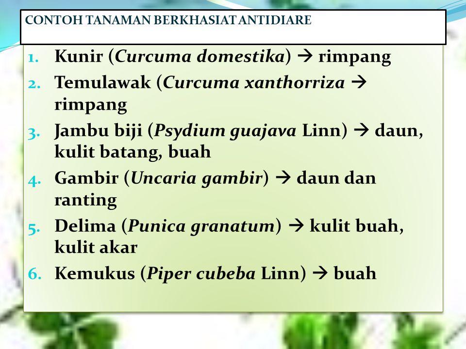 Kunir (Curcuma domestika)  rimpang