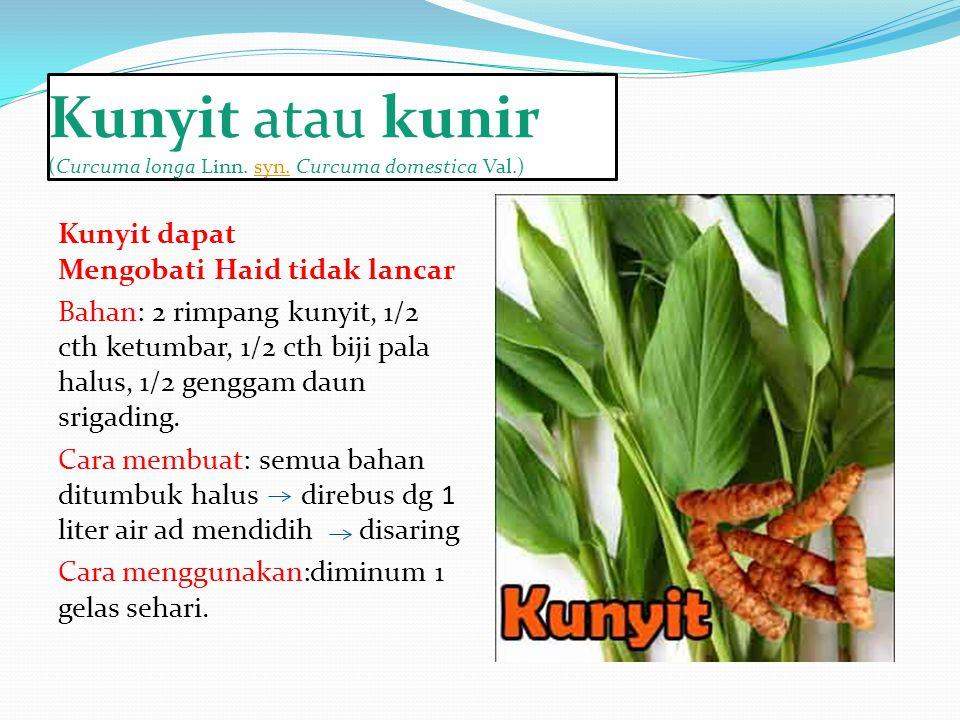 Kunyit atau kunir (Curcuma longa Linn. syn. Curcuma domestica Val.)