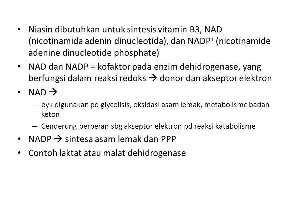 NADP  sintesa asam lemak dan PPP