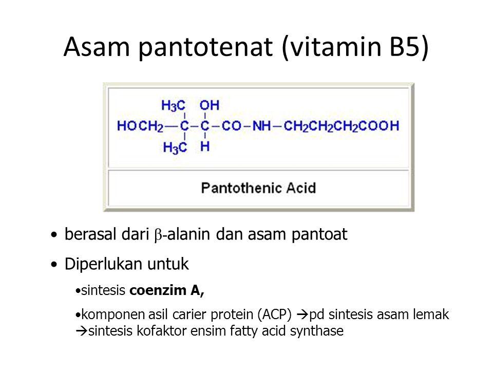 Asam pantotenat (vitamin B5)