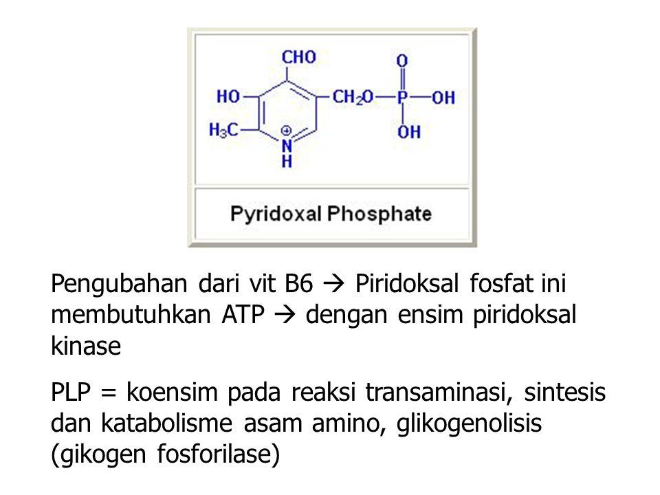 Pengubahan dari vit B6  Piridoksal fosfat ini membutuhkan ATP  dengan ensim piridoksal kinase
