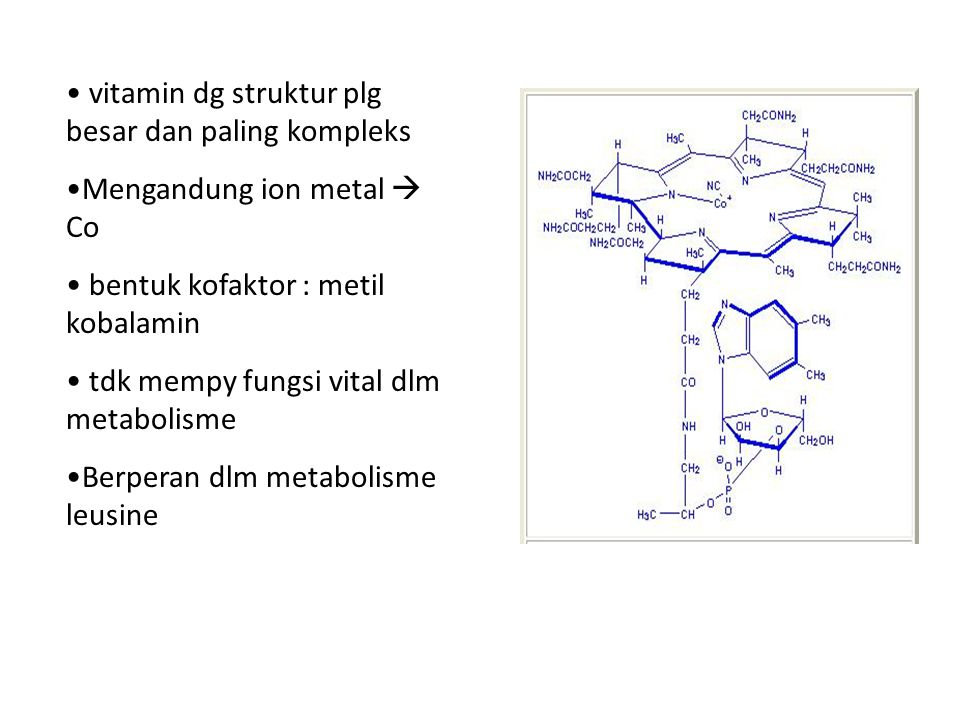vitamin dg struktur plg besar dan paling kompleks
