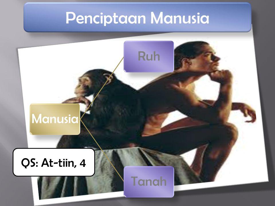 Penciptaan Manusia Manusia Ruh Tanah QS: At-tiin, 4