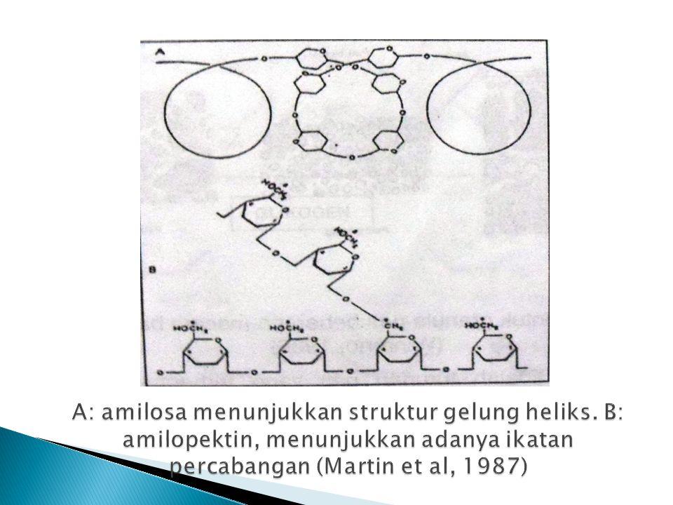 A: amilosa menunjukkan struktur gelung heliks