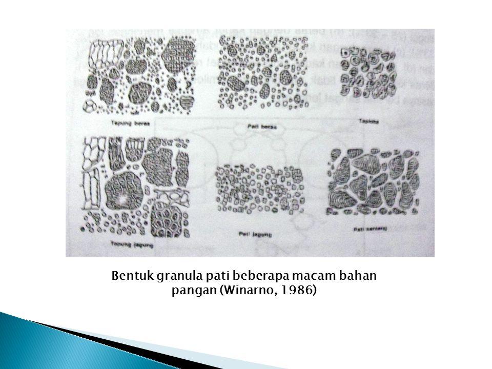 Bentuk granula pati beberapa macam bahan pangan (Winarno, 1986)