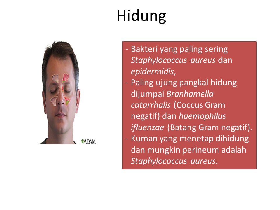 Hidung Bakteri yang paling sering Staphylococcus aureus dan epidermidis,