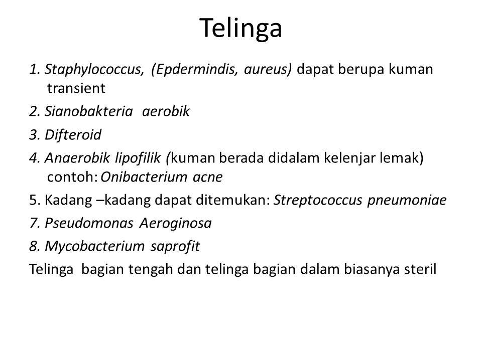 Telinga 1. Staphylococcus, (Epdermindis, aureus) dapat berupa kuman transient. 2. Sianobakteria aerobik.