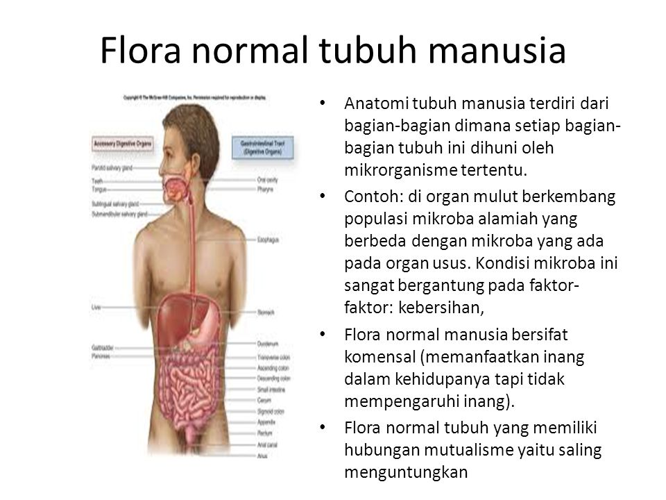 normal flora The normal flora are bacteria which are found in or on our bodies on a semi-permanent basis without causing disease there are more bacteria living in or on our bodies, than we have cells of our own a human body contains around 10 13 cells the human body is home to around 10 14 bacteria one.