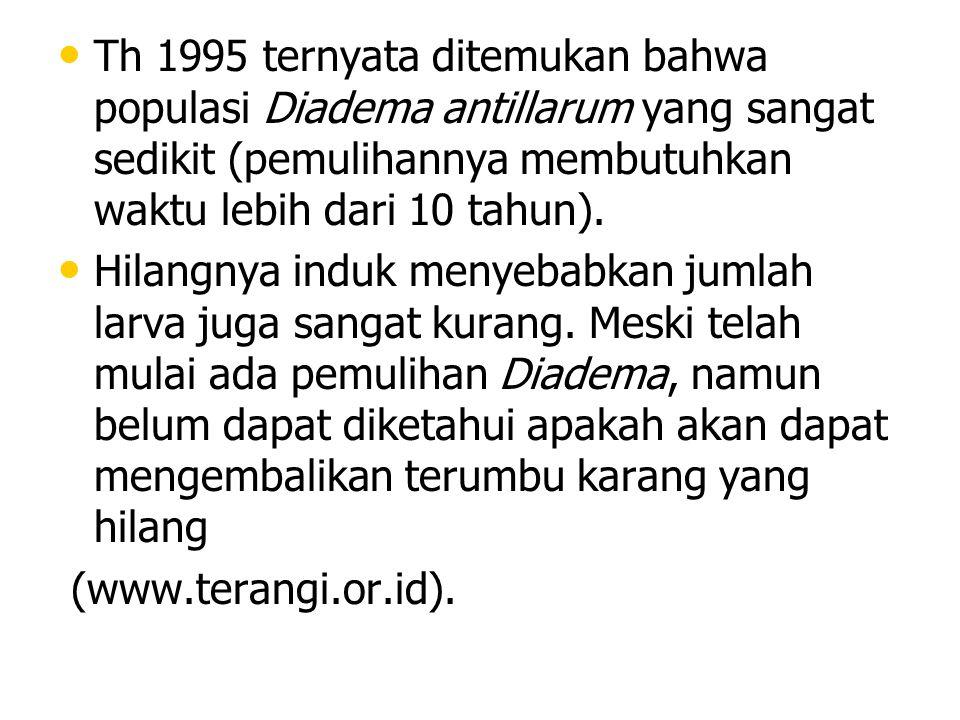 Th 1995 ternyata ditemukan bahwa populasi Diadema antillarum yang sangat sedikit (pemulihannya membutuhkan waktu lebih dari 10 tahun).