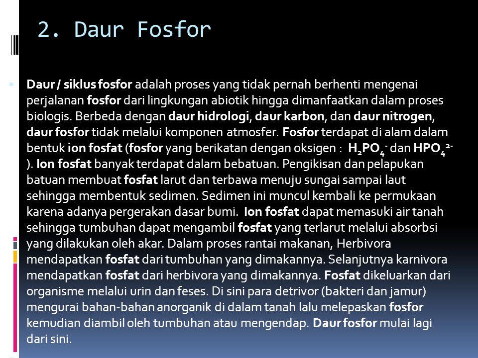 2. Daur Fosfor