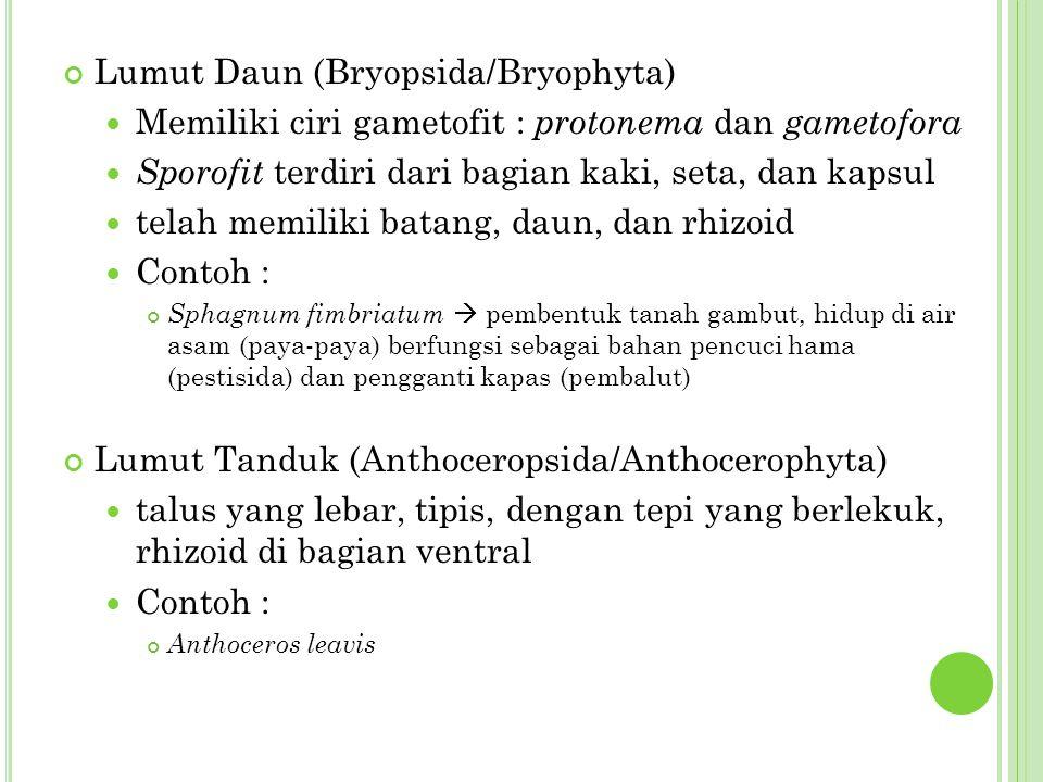 Lumut Daun (Bryopsida/Bryophyta)