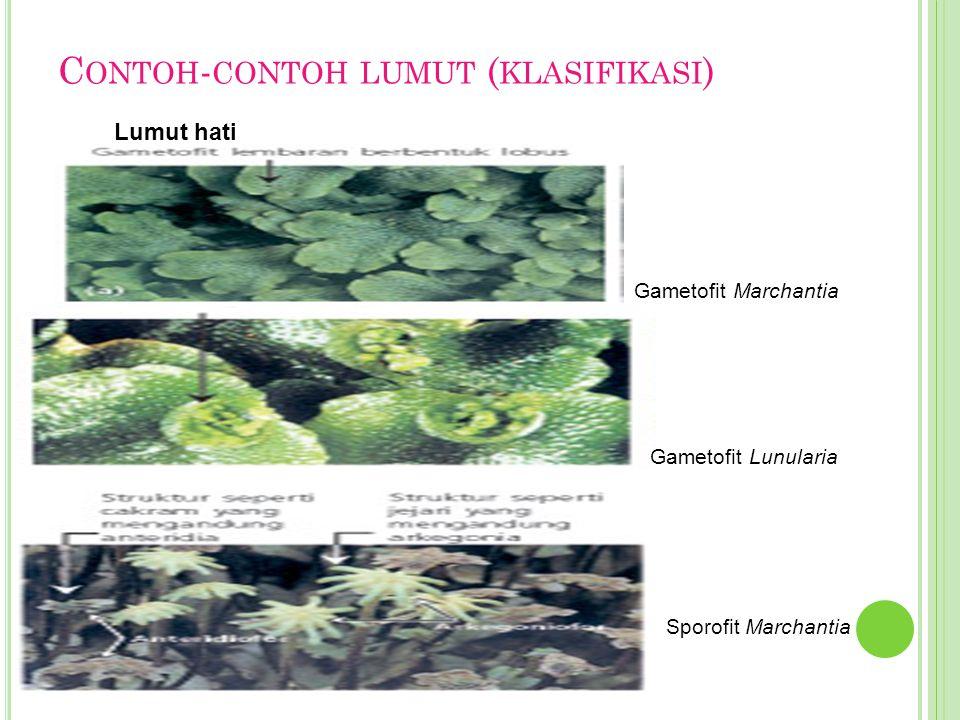 Contoh-contoh lumut (klasifikasi)