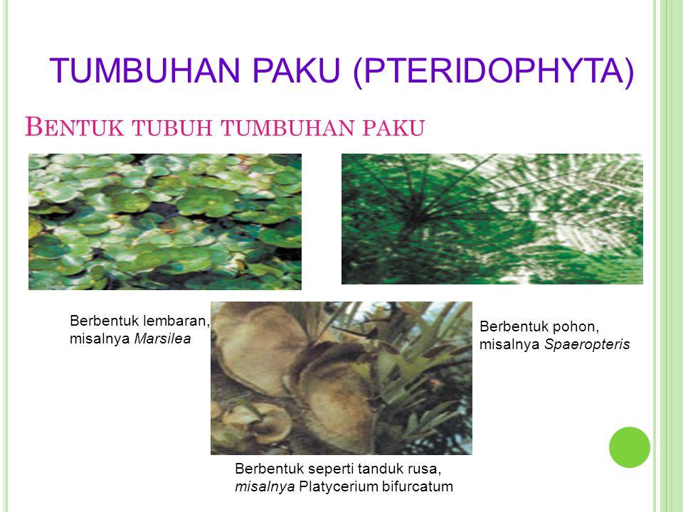 Bentuk tubuh tumbuhan paku
