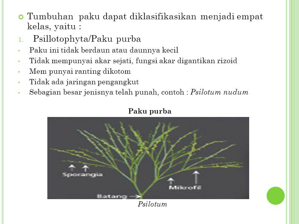 Tumbuhan paku dapat diklasifikasikan menjadi empat kelas, yaitu :