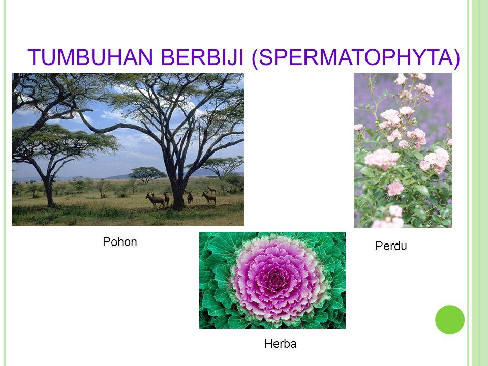 TUMBUHAN BERBIJI (SPERMATOPHYTA)