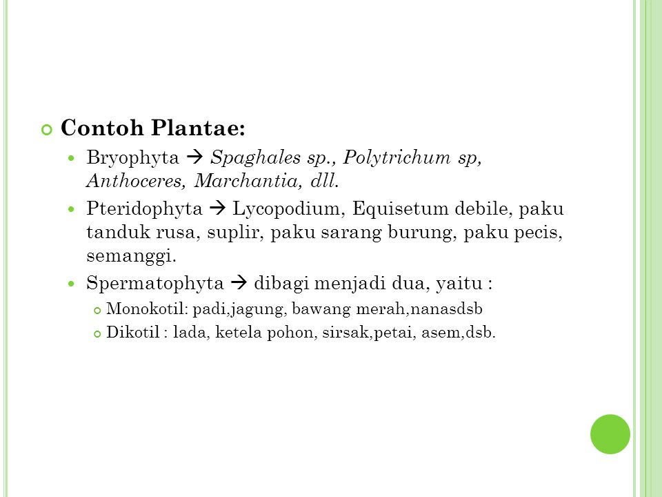 Contoh Plantae: Bryophyta  Spaghales sp., Polytrichum sp, Anthoceres, Marchantia, dll.