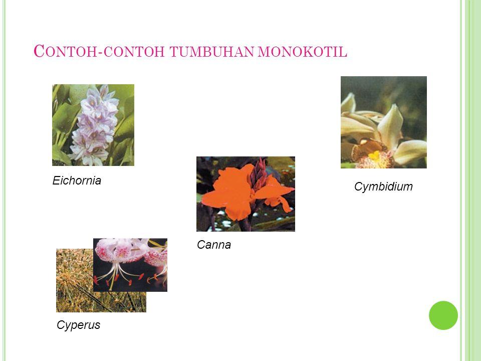 Contoh-contoh tumbuhan monokotil