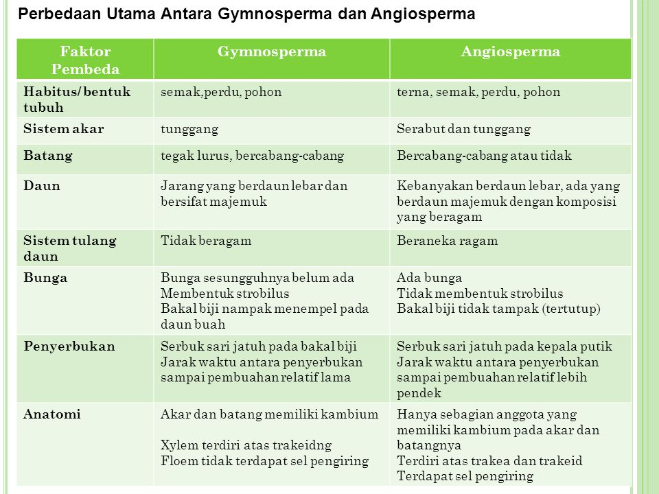 Perbedaan Utama Antara Gymnosperma dan Angiosperma