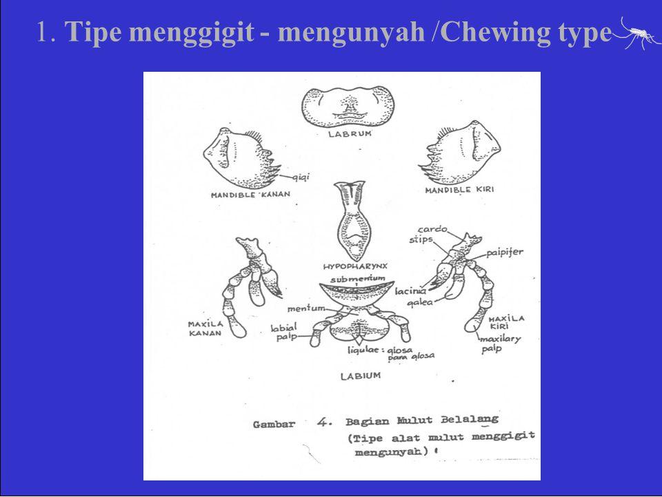 1. Tipe menggigit - mengunyah /Chewing type