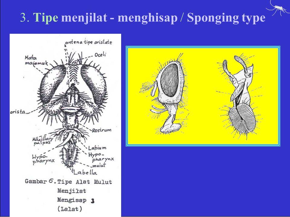 3. Tipe menjilat - menghisap / Sponging type