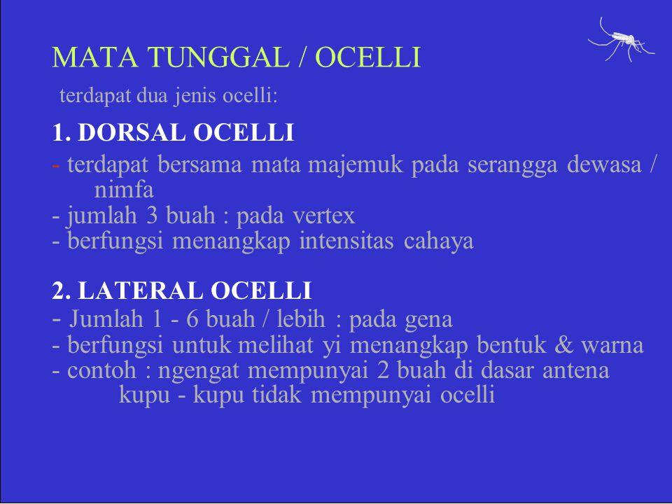 terdapat dua jenis ocelli: