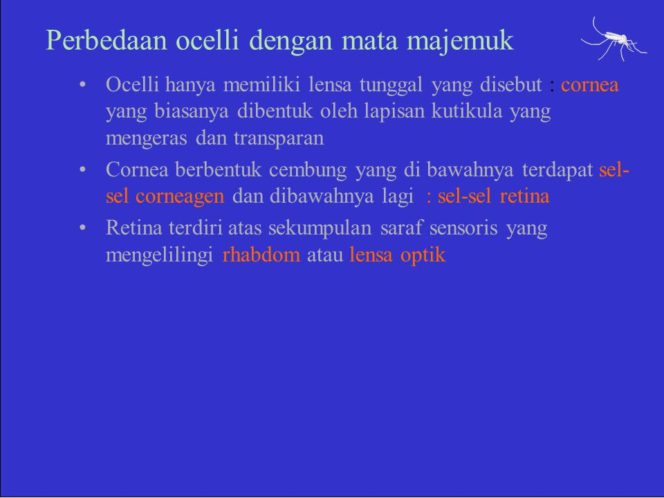 Perbedaan ocelli dengan mata majemuk