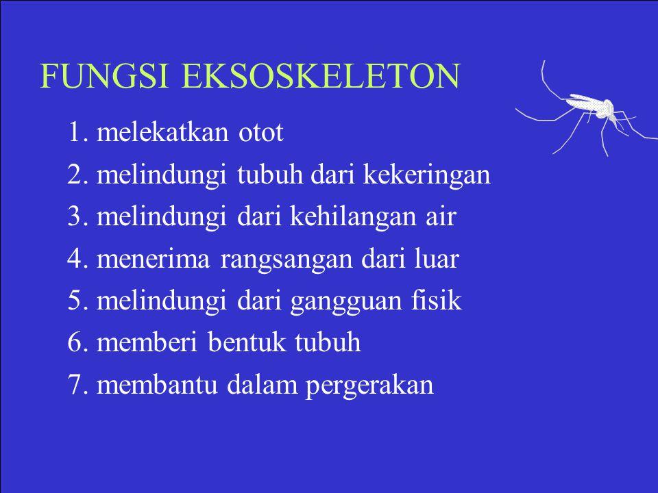 FUNGSI EKSOSKELETON 1. melekatkan otot