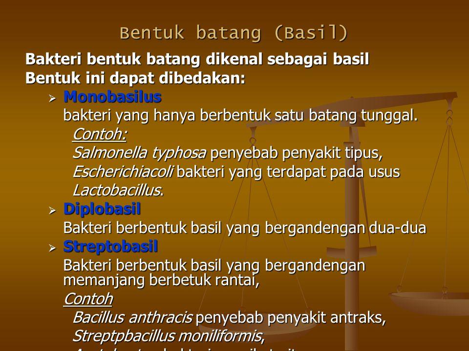 Bentuk batang (Basil) Bakteri bentuk batang dikenal sebagai basil