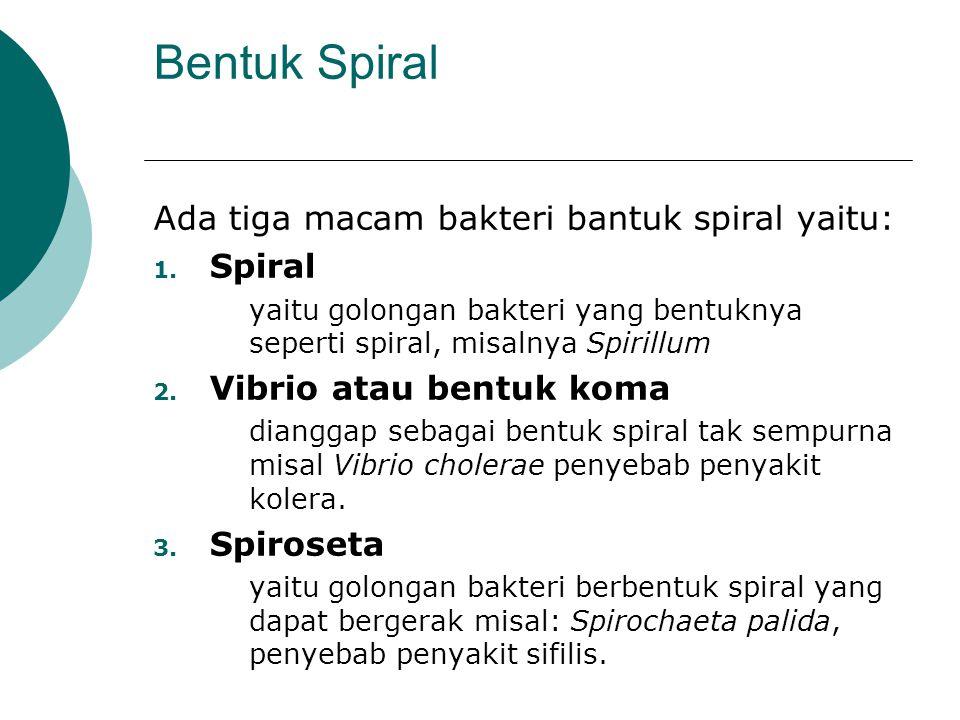 Bentuk Spiral Ada tiga macam bakteri bantuk spiral yaitu: Spiral