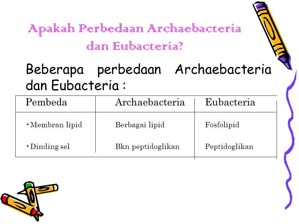Apakah Perbedaan Archaebacteria dan Eubacteria